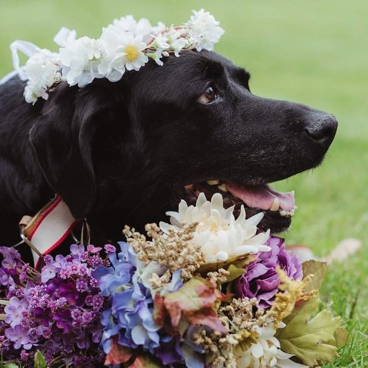 boda-con-perro-enfermo-03