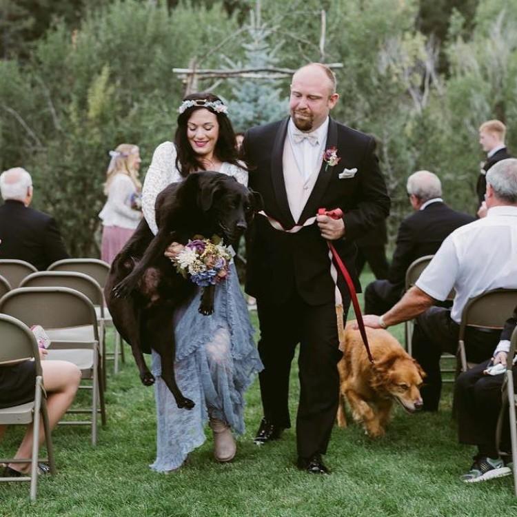 boda-con-perro-enfermo-04