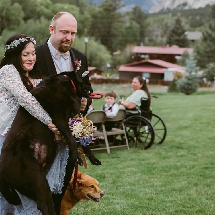 boda-con-perro-enfermo-05