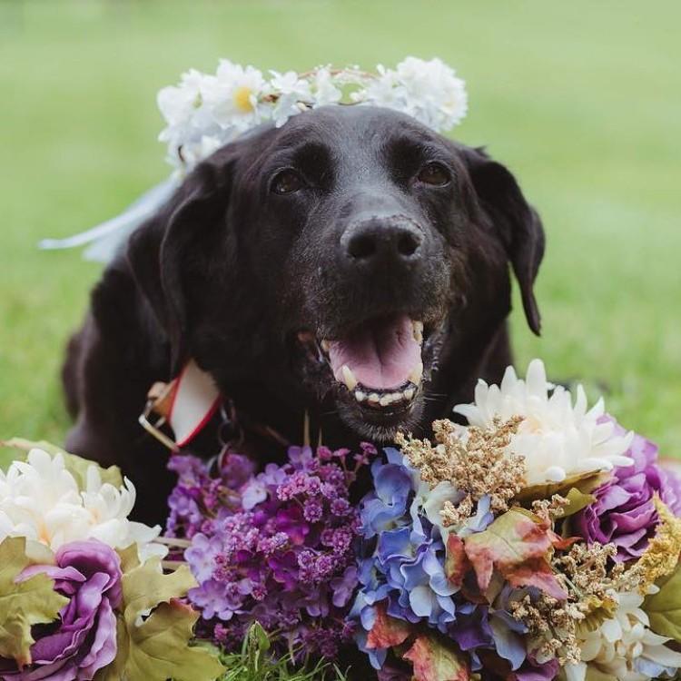 boda-con-perro-enfermo-08