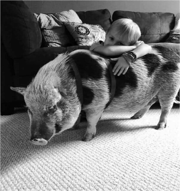 cerdo-que-fue-abusado-6
