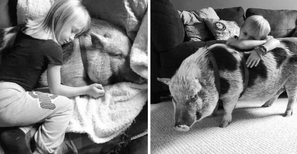 cerdo-que-fue-abusado-portada