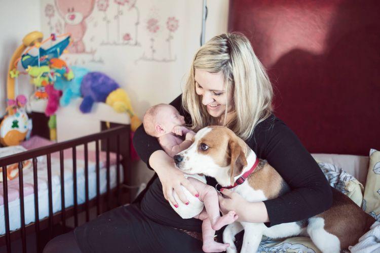 charlie-perro-beagle-cuida-bebe-1