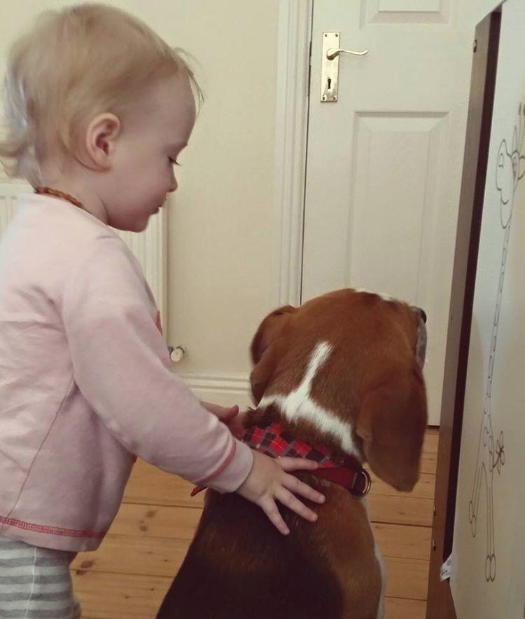 charlie-perro-beagle-cuida-bebe-2