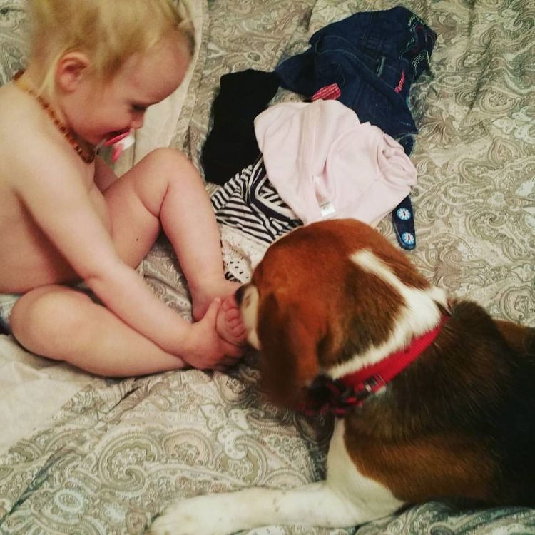 charlie-perro-beagle-cuida-bebe-3