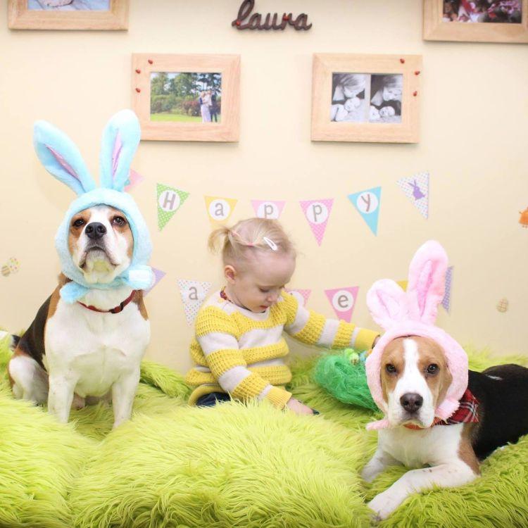 charlie-perro-beagle-cuida-bebe-6