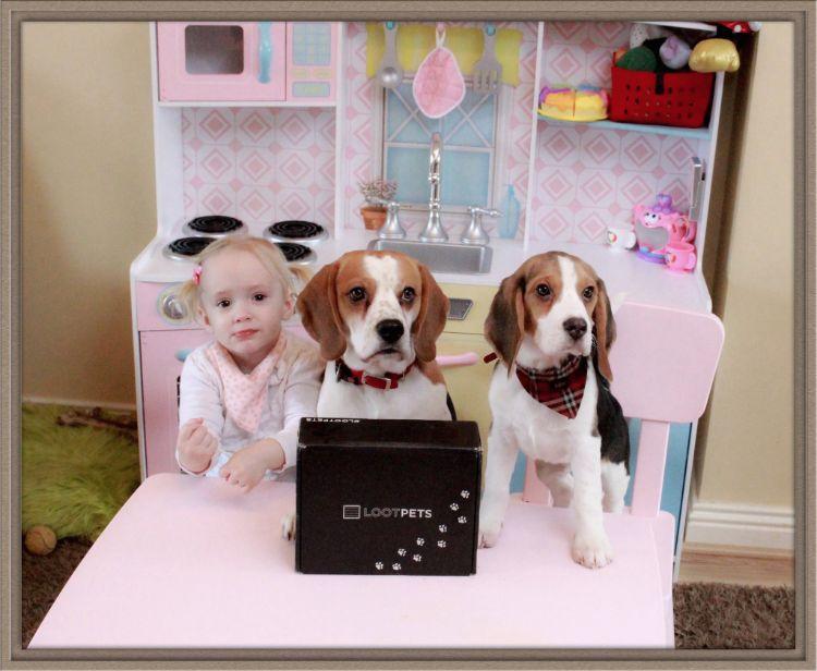 charlie-perro-beagle-cuida-bebe-7