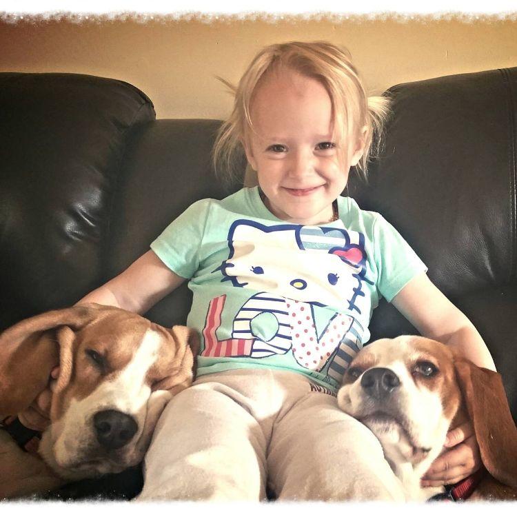 charlie-perro-beagle-cuida-bebe-8