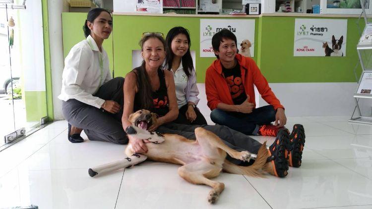 cola-perro-sin-patas-8