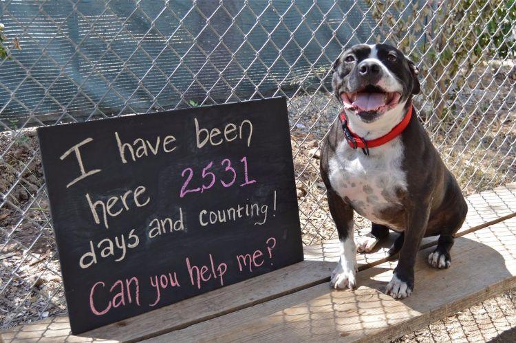 dahlia-perra-para-adopcion-3