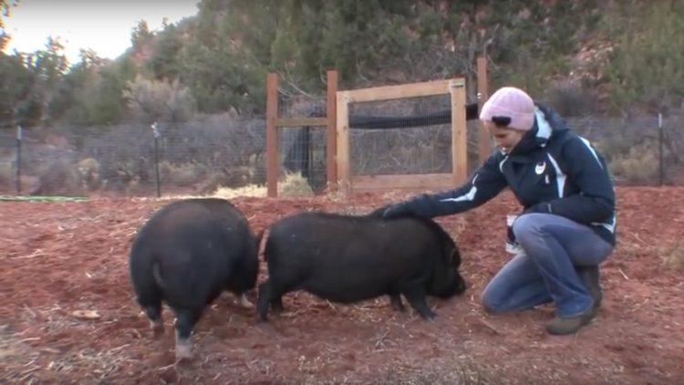 Debes saber que un cerdo taza de te va a crecer 6