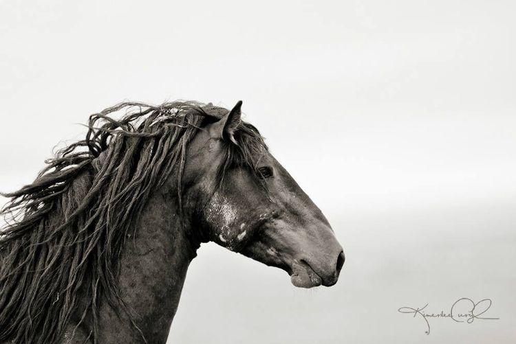 defensa-caballos-salvajes-estados-unidos-2
