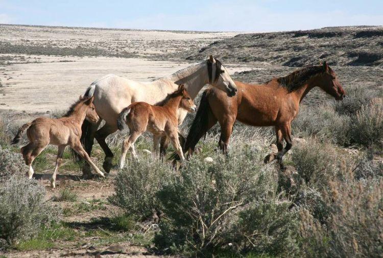defensa-caballos-salvajes-estados-unidos-5