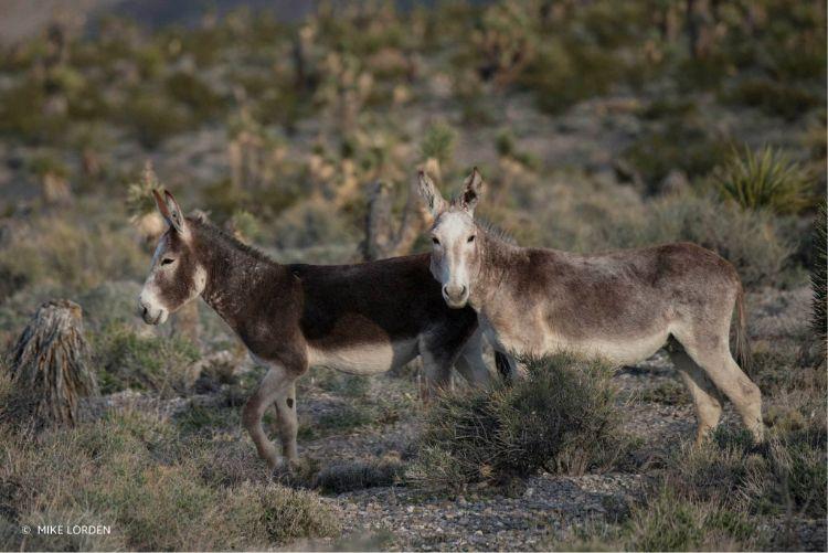 defensa-caballos-salvajes-estados-unidos-7