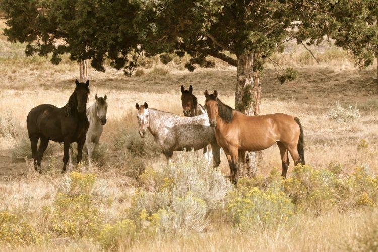 defensa-caballos-salvajes-estados-unidos-9