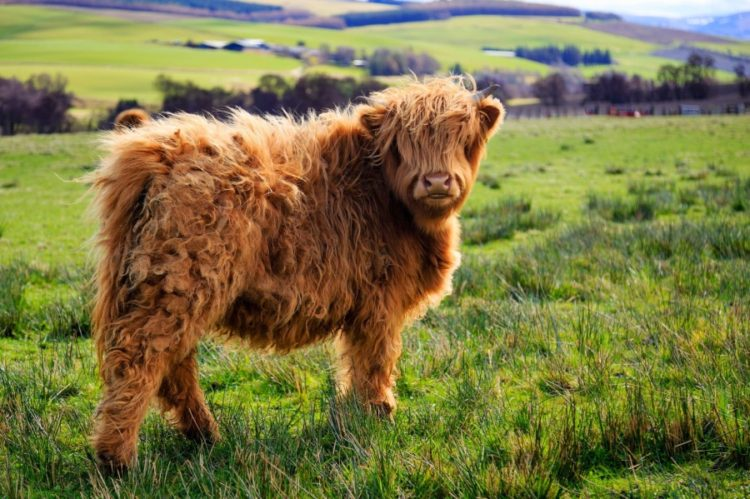 diez-animales-realmente-unicos-que-no-va-a-creer-realmente-existe-8