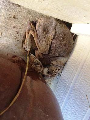 enfermo-perro-encontrado-acurrucado-en-el-portico-se-ocultaba-1