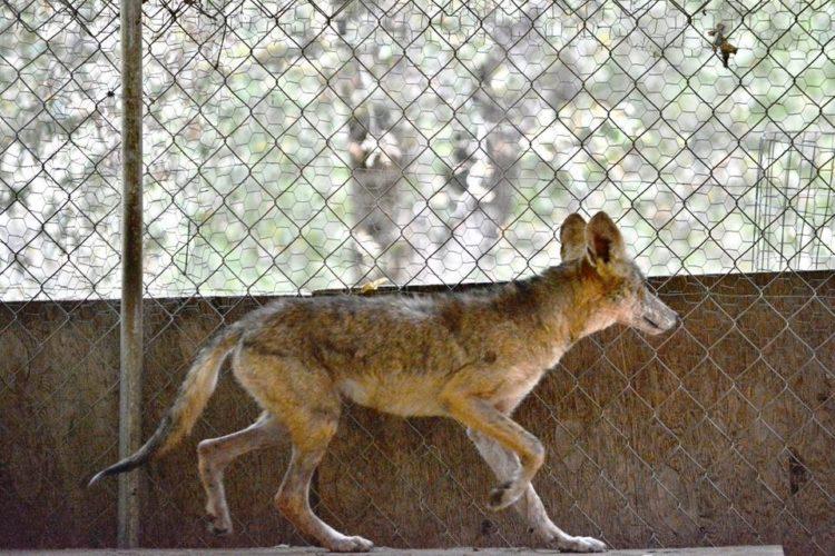 enfermo-perro-encontrado-acurrucado-en-el-portico-se-ocultaba-6