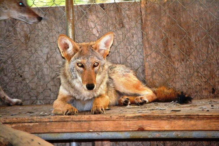 enfermo-perro-encontrado-acurrucado-en-el-portico-se-ocultaba-7