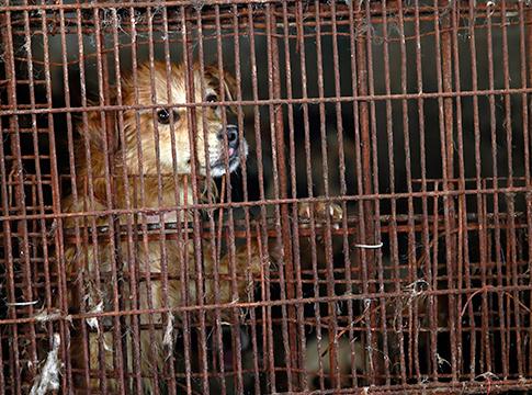 festival-carne-de-perro-yulin-2