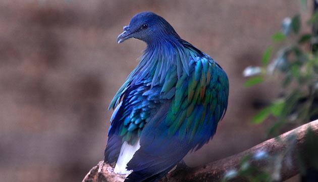 las-personas-estan-matando-a-estas-aves-para-hacer-joyas-10
