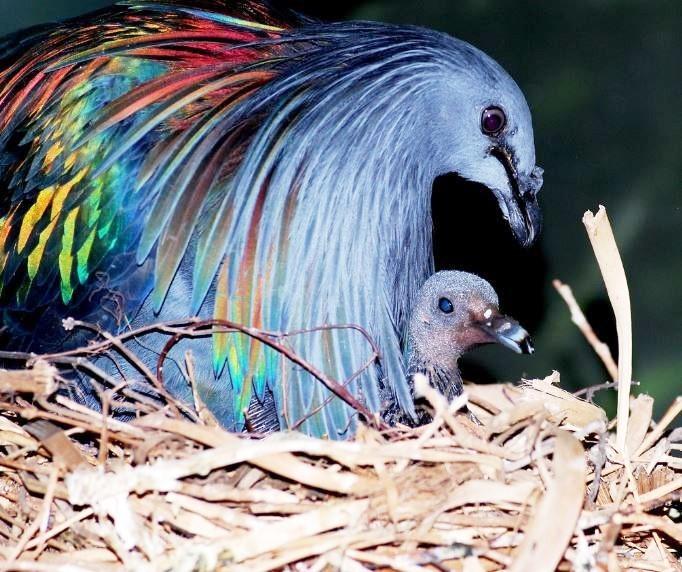 las-personas-estan-matando-a-estas-aves-para-hacer-joyas-5