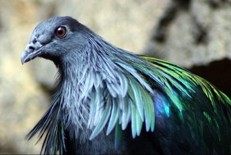 las-personas-estan-matando-a-estas-aves-para-hacer-joyas-6