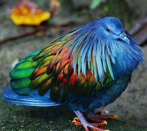 las-personas-estan-matando-a-estas-aves-para-hacer-joyas-9