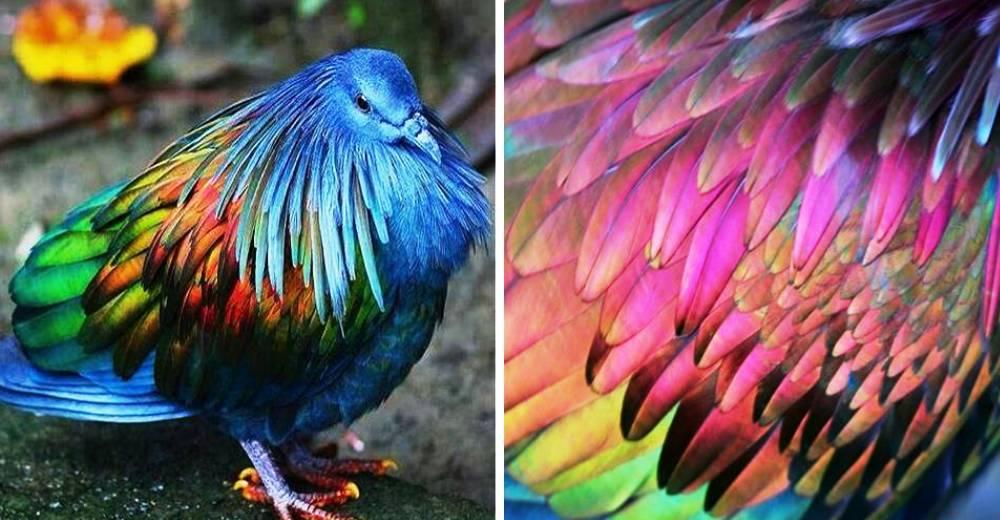 las-personas-estan-matando-a-estas-aves-para-hacer-joyas-portada