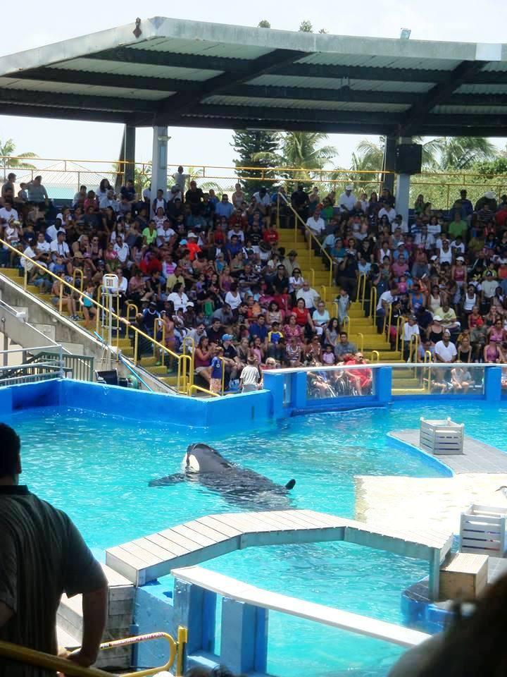 lolita-ballena-orca-10