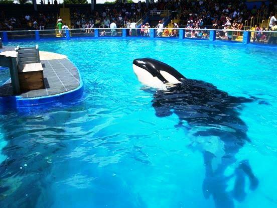lolita-ballena-orca-12