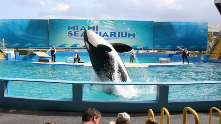 lolita-ballena-orca-13