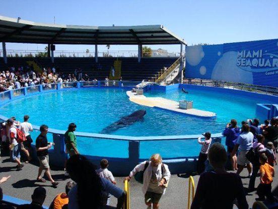 lolita-ballena-orca-17