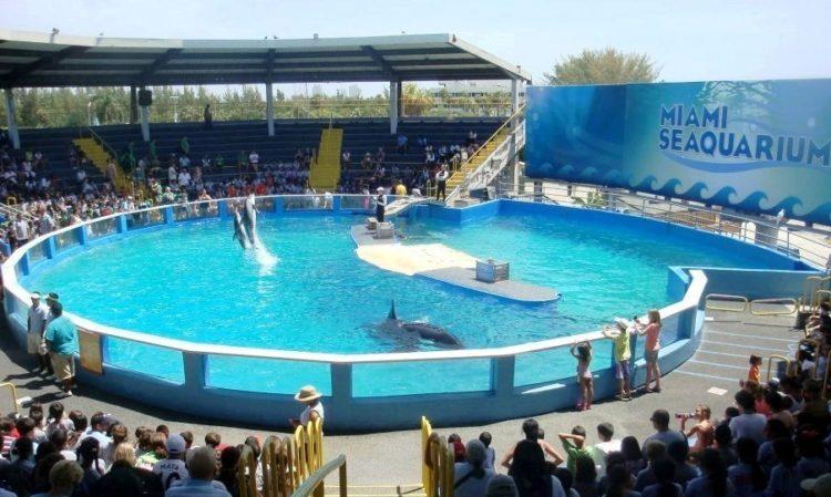 lolita-ballena-orca-19