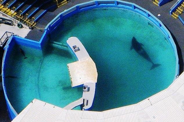lolita-ballena-orca-3