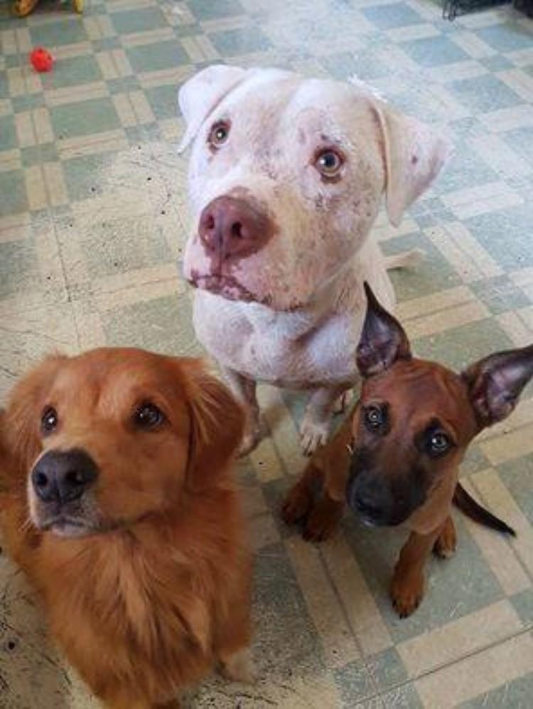 mojo-perro-rescatado-familia-03