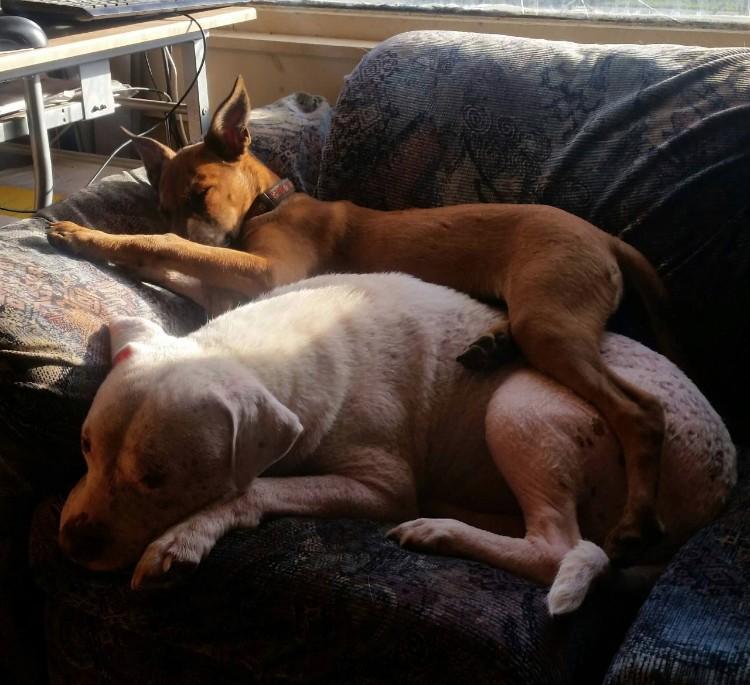 mojo-perro-rescatado-familia-10