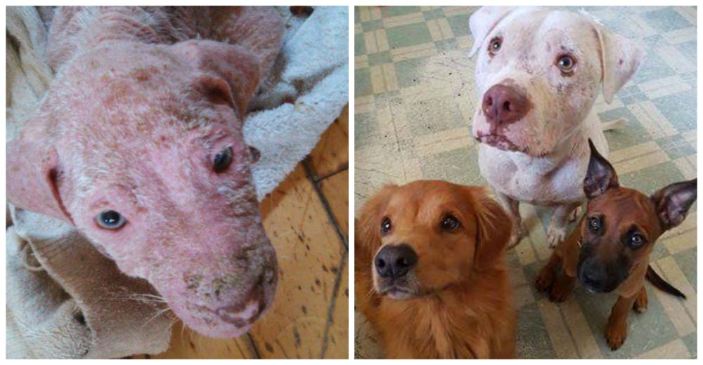 mojo-perro-rescatado-familia-portada