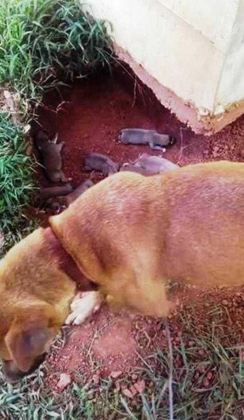 perro-esconde-sus-cachorroshasta-que-llegue-ayuda-2