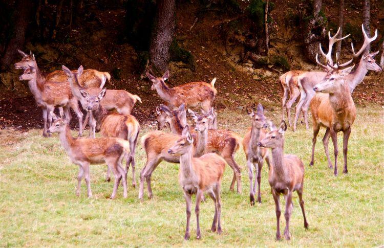 prohiben-coto-caza-argentina-5