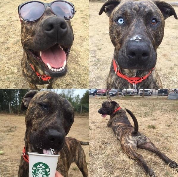 refugio-kitsap-lleva-a-sus-perros-a-starbucks-para-degustar-puppuccino-10