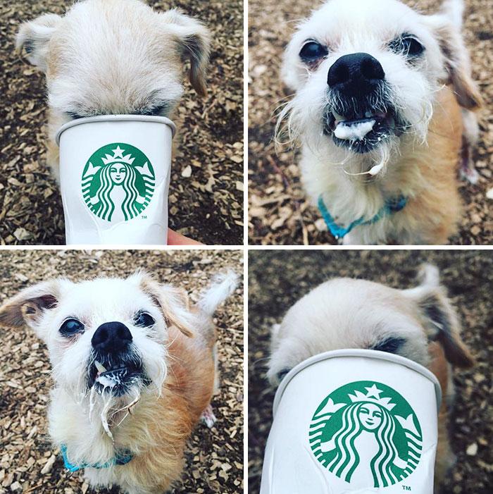 refugio-kitsap-lleva-a-sus-perros-a-starbucks-para-degustar-puppuccino-5