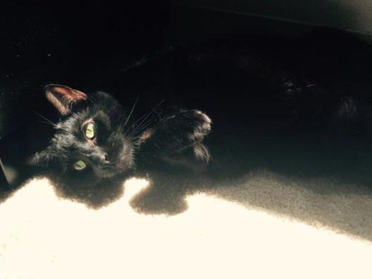 refugio-sin-gatos-4