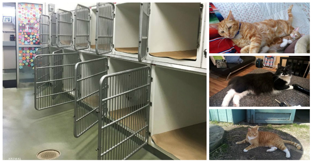 refugio-sin-gatos-portada