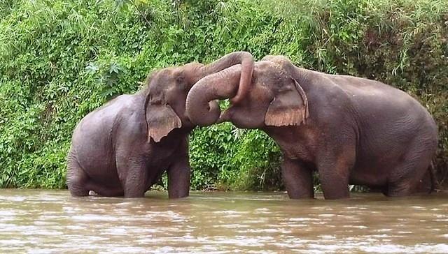 se-retiran-dos-elefantes-y-se-enamoran-1