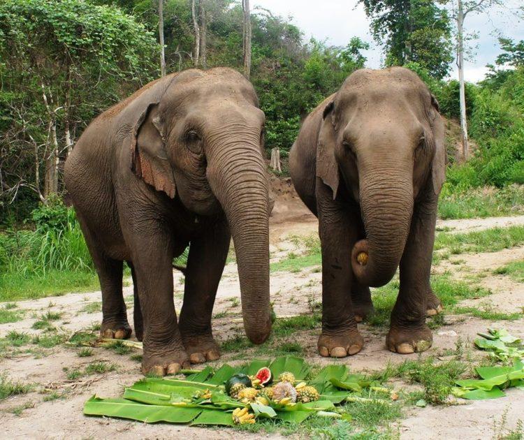 se-retiran-dos-elefantes-y-se-enamoran-11