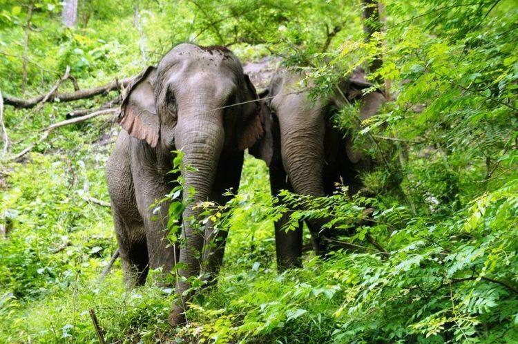 se-retiran-dos-elefantes-y-se-enamoran-12