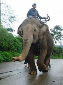 se-retiran-dos-elefantes-y-se-enamoran-2
