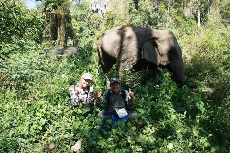 se-retiran-dos-elefantes-y-se-enamoran-3