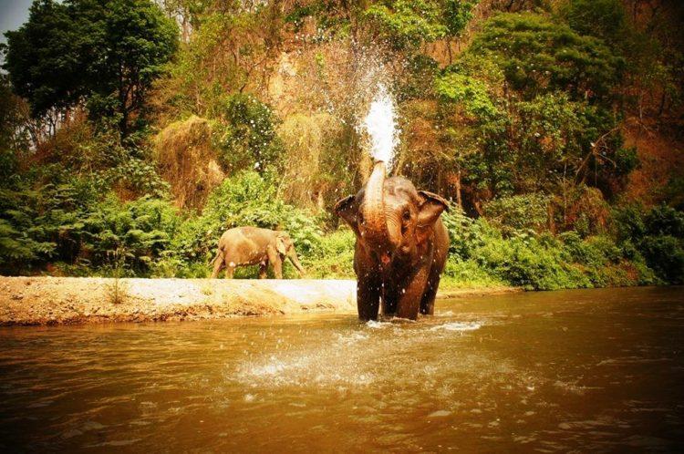 se-retiran-dos-elefantes-y-se-enamoran-4